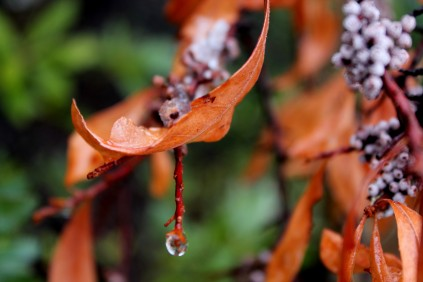 Water Escaping the Leaf