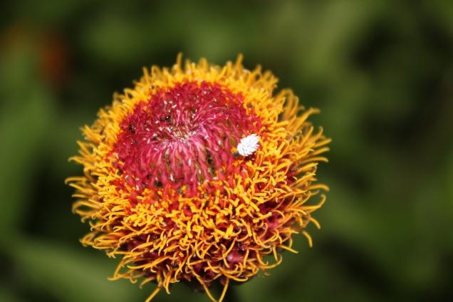 Flower #1